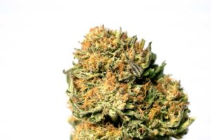 pot zero strain double bubba