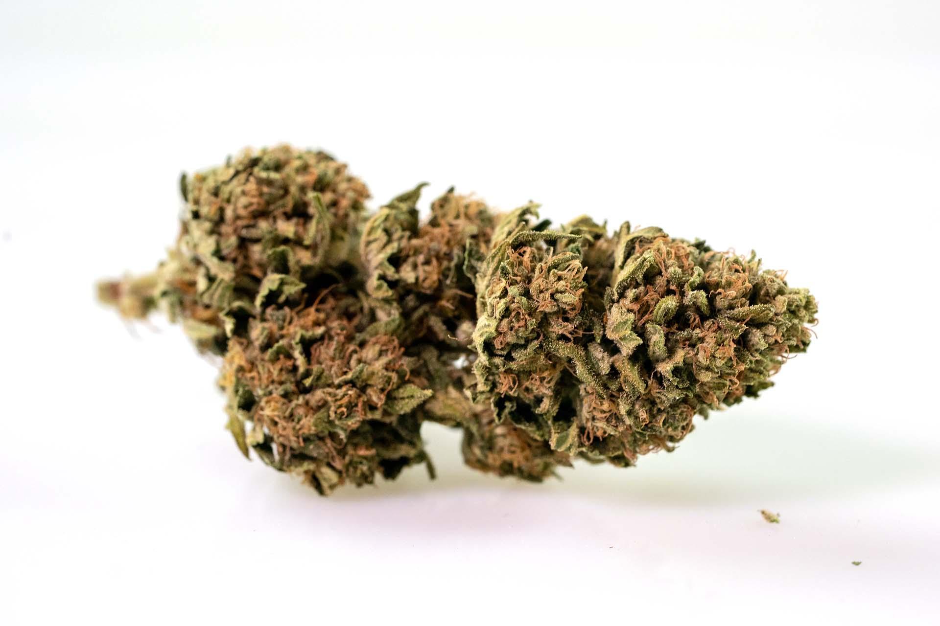 pot zero strain jabba