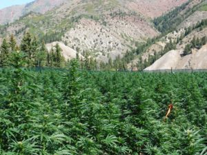 pot zero carbon footprint farm colorado