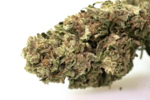 pot zero strain colorado thunder