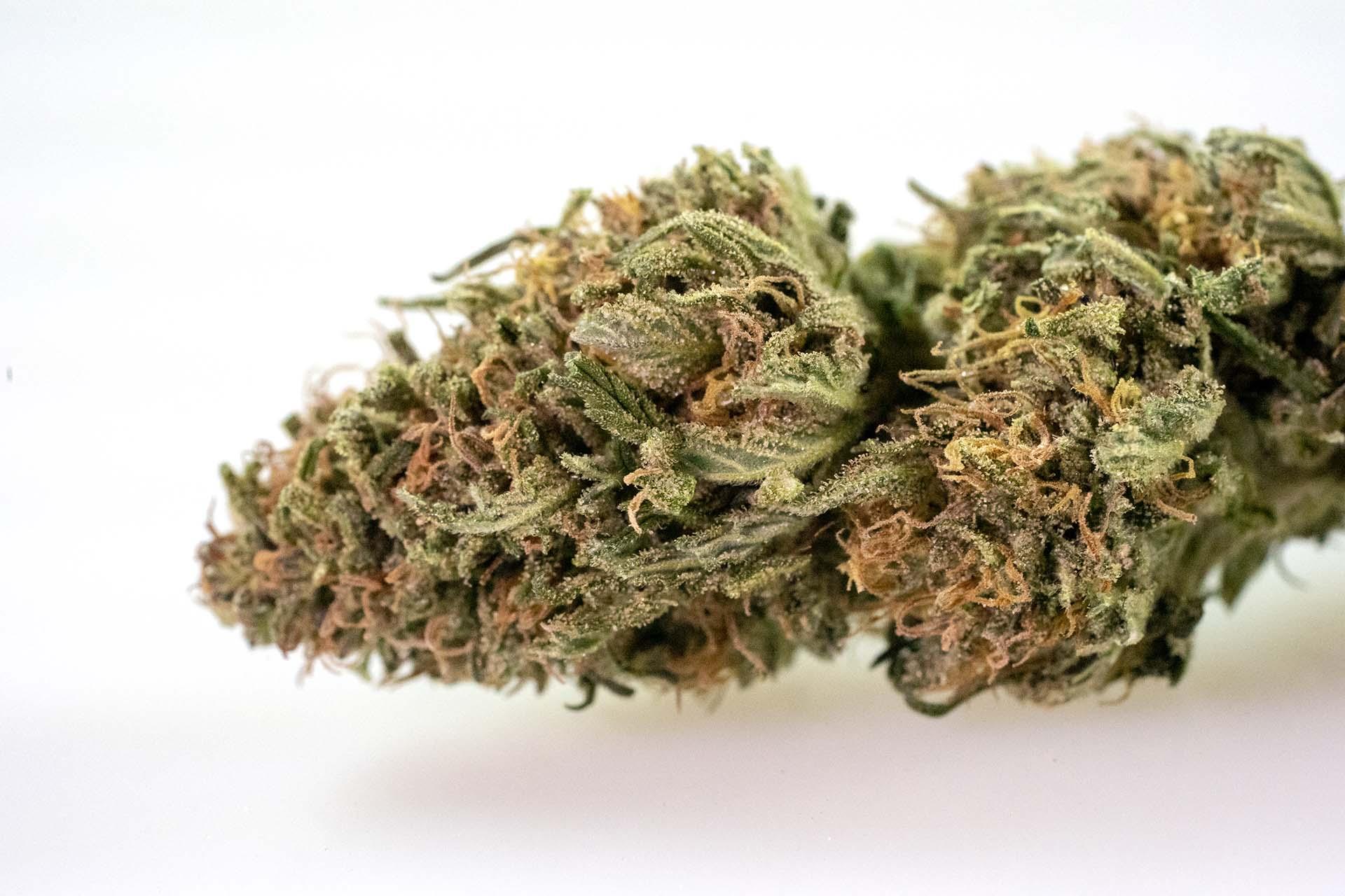Flower • Pot Zero • Zero Footprint Organic Marijuana Farm