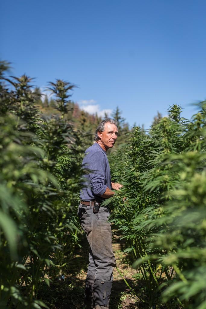 pot zero organic marijuana rob trotter