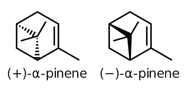 cannabis terpenes cultivar alpha pinene
