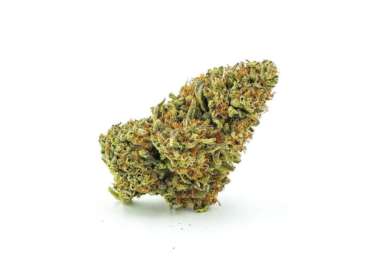 punchout punch out marijuana strain